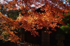 美術館庭園紅葉めぐり